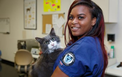 Veterinary Assistant program overview